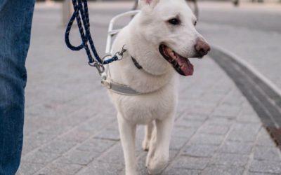 Steuererlass für Assistenz- und Besuchshunde und Tierheimhunde kommt