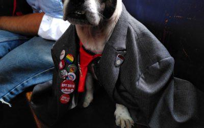 Neue Hundesteuerbefreiungen: Sophies Rede zum Hundesteuererlass für Assistenz- und Tierheimhunde